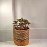 Round Cane Planter